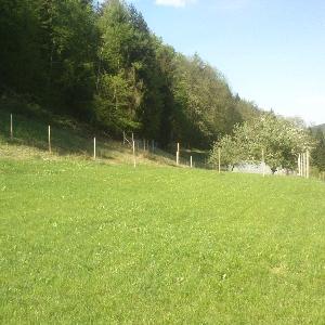 Zazidljivo zemljišče v Logu - Bistrica ob Dravi